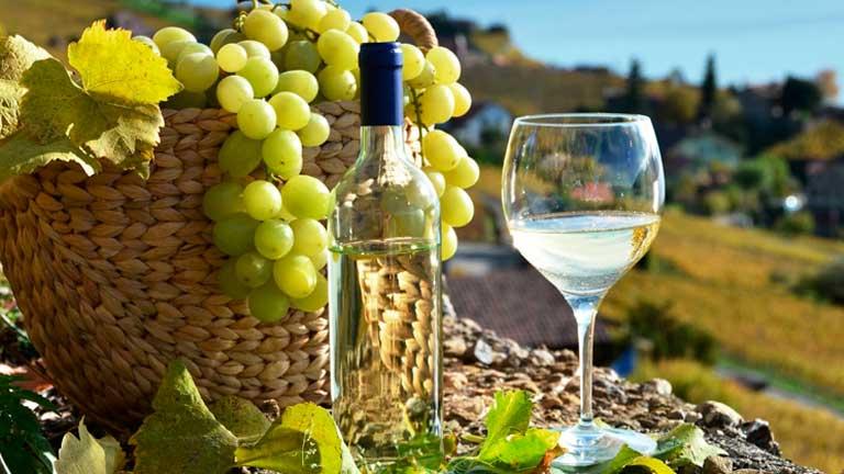 Variedades de uva para la elaboración del Pisco