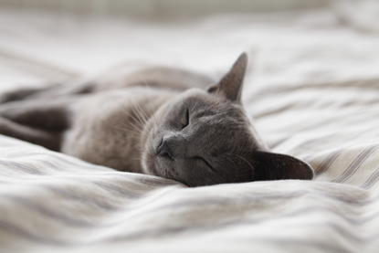 grey cat sleeping on bed