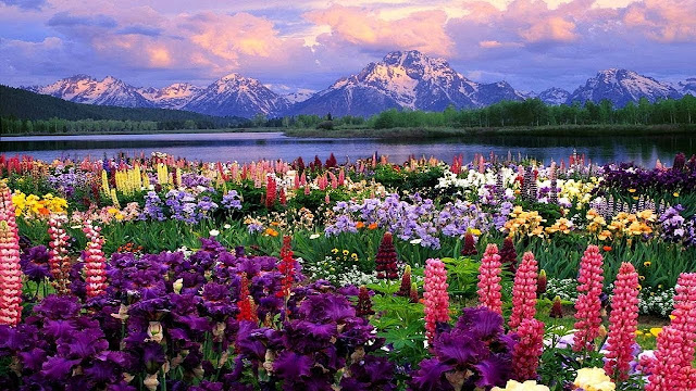 Nature Hd Wallpapers For Laptop
