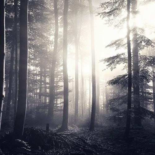 лес / темный лес / forest / dark forest Wallpaper Engine
