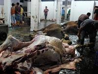 Jelang Lebaran Tim gabungan Pemkot Magelang Razia Penjualan Daging