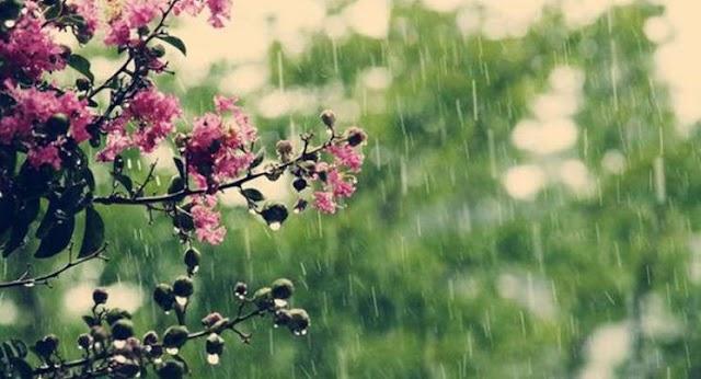 Грозові дощі відступають із України, температура повітря вдень до +26 градусів