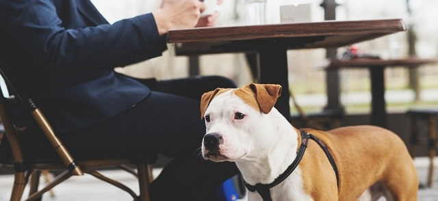 importance dog friendly businesses