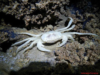 albino cave image