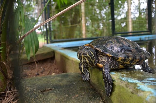 Dieren gestolen uit Paramaribo zoo
