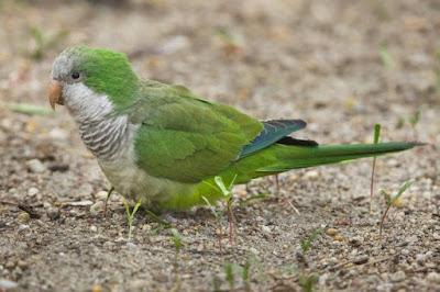 Name this greenish bird