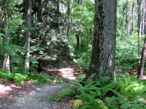 Ontario County Park Trail