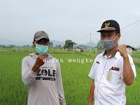 """Sinergitas 3 pilar desa Winong bersama sama adakan penyemprotan POC bersama kelompok tani """" Tani Mulyo""""desa Winong."""