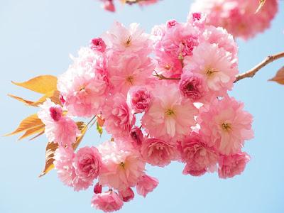 Amazing Facts about Japan in Hindi - जापान के बारे में 32 रोचक तथ्य