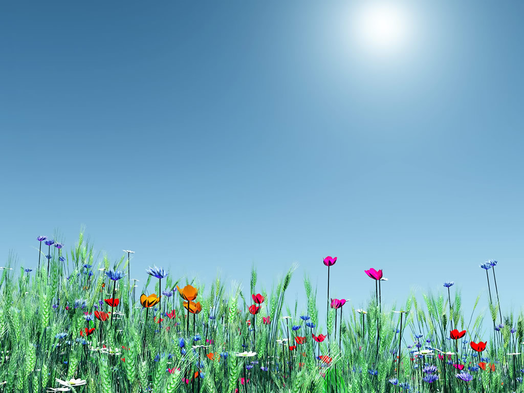 Nature Spring Flowers Desktop