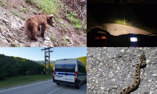 Φωτογραφικά στιγμιότυπα από τις ασυνήθιστες και απρόσμενες –τουλάχιστον ορισμένες- συναντήσεις που έχουν αστυνομικοί των Κινητών Μονάδων ανήρτησε στη σελίδα της η Γενική Αστυνομική Διεύθυνση Ηπείρου.