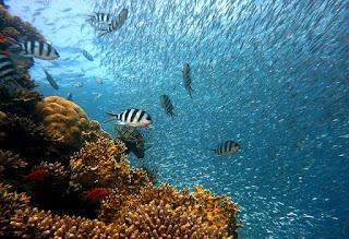 Corals are marine animals