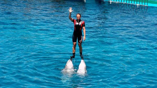 Ordenan liberación de todos los delfines en parques acuáticos de la Ciudad de México.