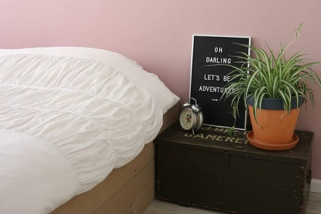 Graslelie Kamerplant