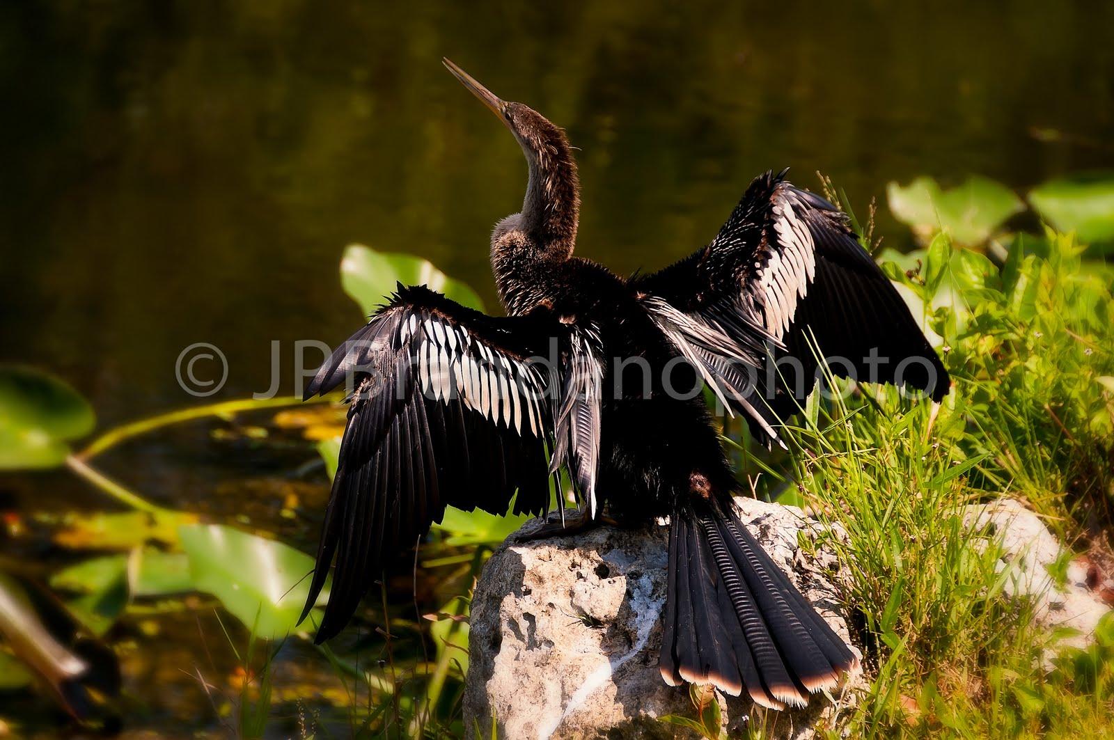 JP BRANDANO: FLORIDAS FINE ART PHOTOGRAPHERS: SHEENA