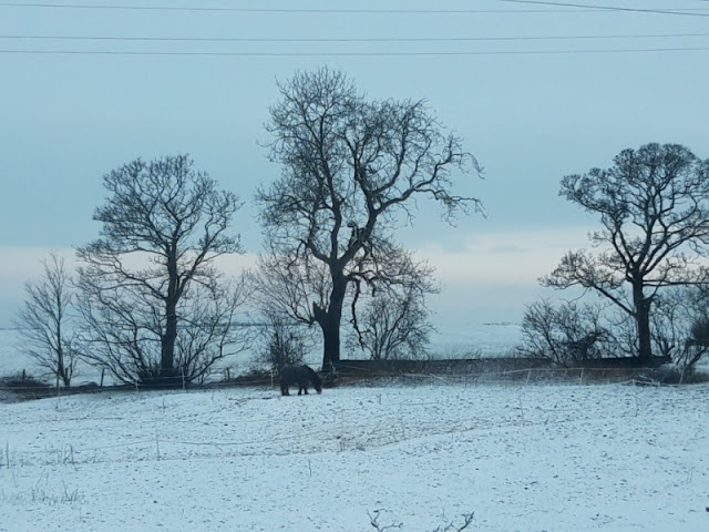 A view across a field.  A black horse is in the centre of the photo with black tree silhouettes behind.  There is snow on the ground, a faint pink glow to the sky