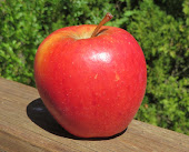 Red tapered apple