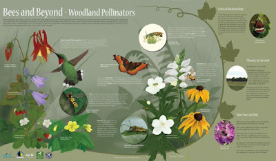 Bees and pollinators interpretive sign
