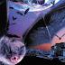 """""""FANGS: MURCIÉLAGOS"""" (2002) Entretenido telefilme sobre... murciélagos"""