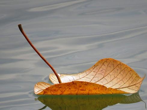 Floating Aloof...
