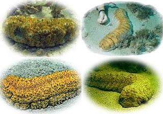 agen-walatra-gamat-emas-kapsul-di-hulu-sungai-selatan