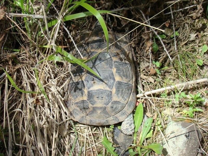Ism - Turtle Z