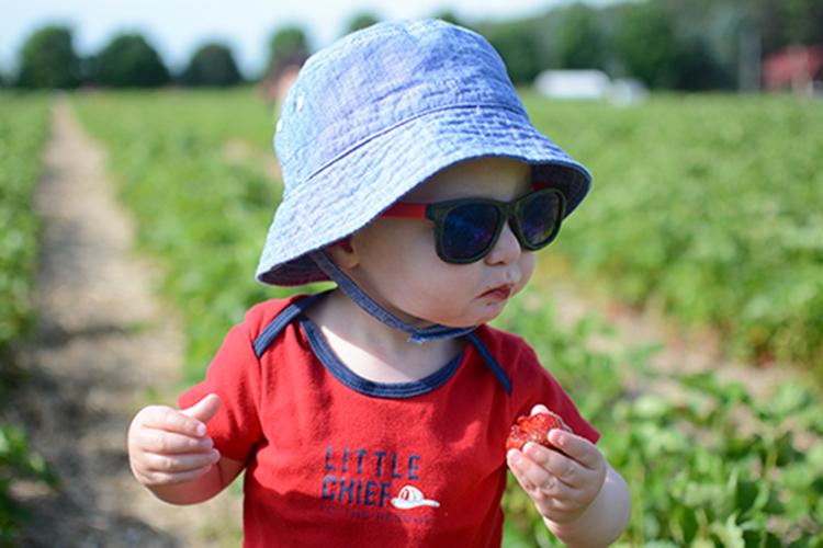 Strawberry picking, 2018 | My Darling Days