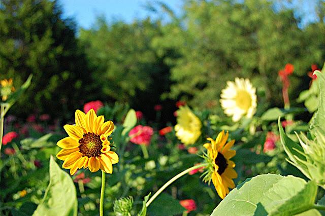 athomewithjemma, flower, farming