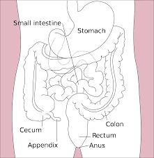Appendix a useless organ