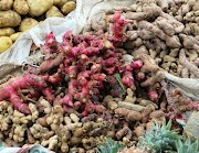 6 Benefits of Red Ginger for Health