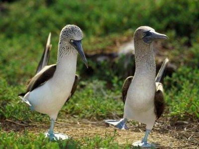 Funnyseagullsdance