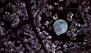 صور قمر 2020 ، اجمل صور للقمر في العالم ، خلفيات قمر hd