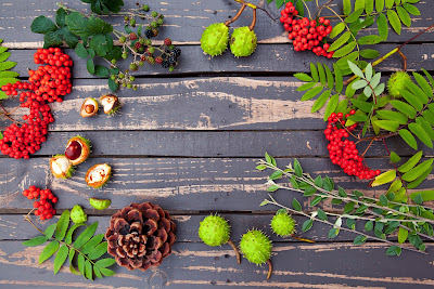 jesień, kasztany, jarzębina, liście; źródło: JestRudo