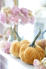Velvet Pumpkins Autumn
