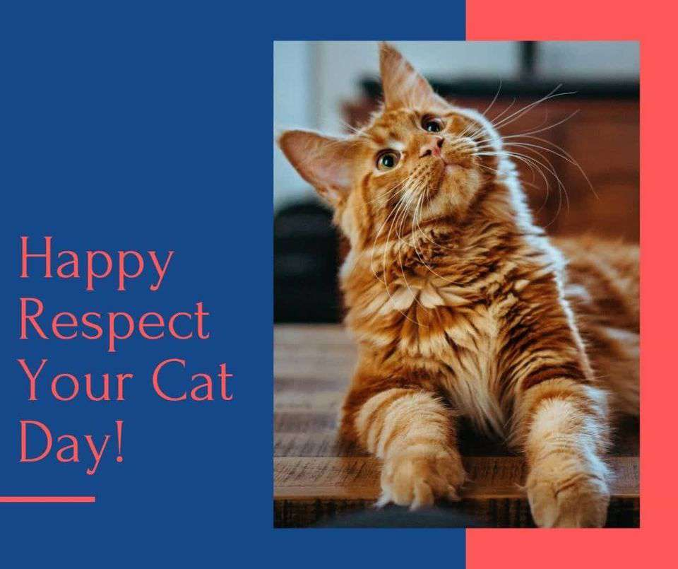 Respect Your Cat Day Wishes Lovely Pics