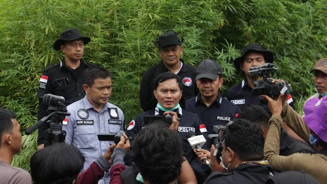 Mabes Polri Musnahkan 300 Ribu Batang Ganja di Lahan Seluas 10 Hektare di Aceh Besar
