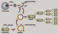 Bioteknologi Teknologi Plasmid