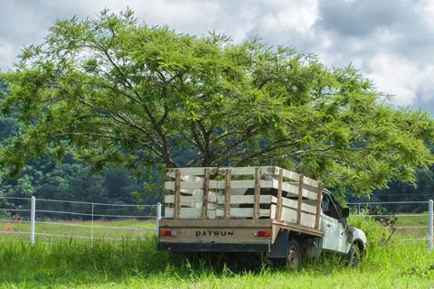 Tree soil compaction Alpharetta Ga