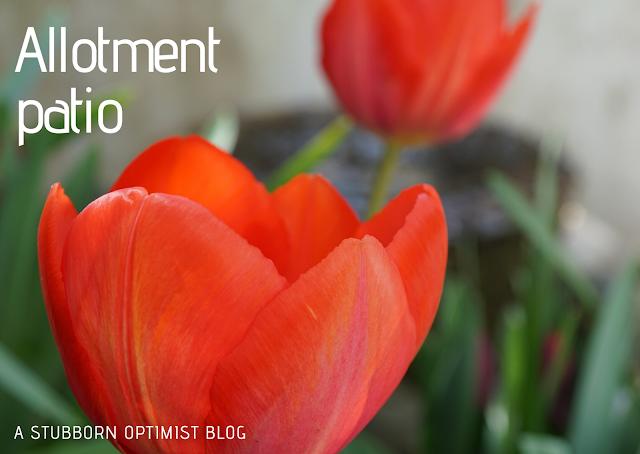 allotment patio - a stubborn optimist blog - C. Gault 2020
