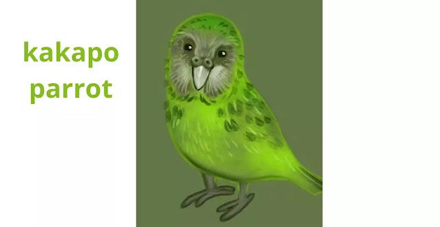 kakapo parrot information in marathi