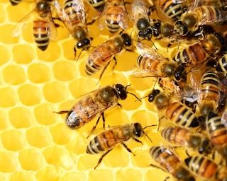 تلقيح النحل للزهور، فوائد العسل
