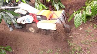 Banh bồn hố trồng cà phê