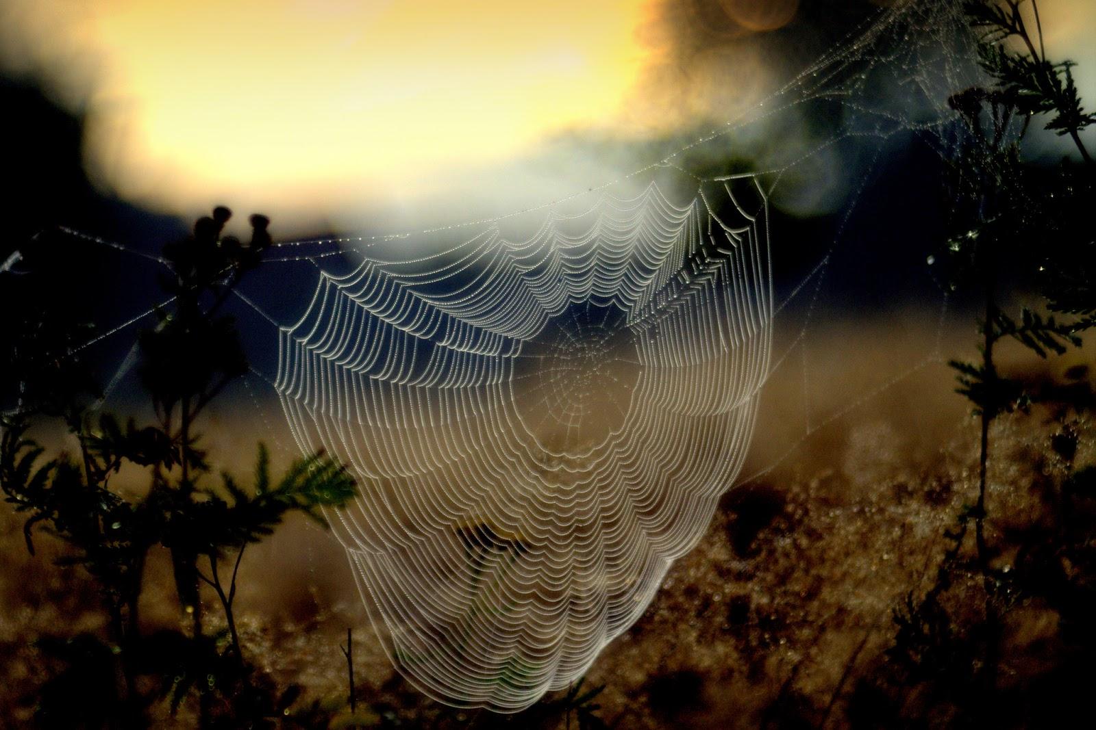 Beautiful And Amazing Photography Wallpaper DP Free ...