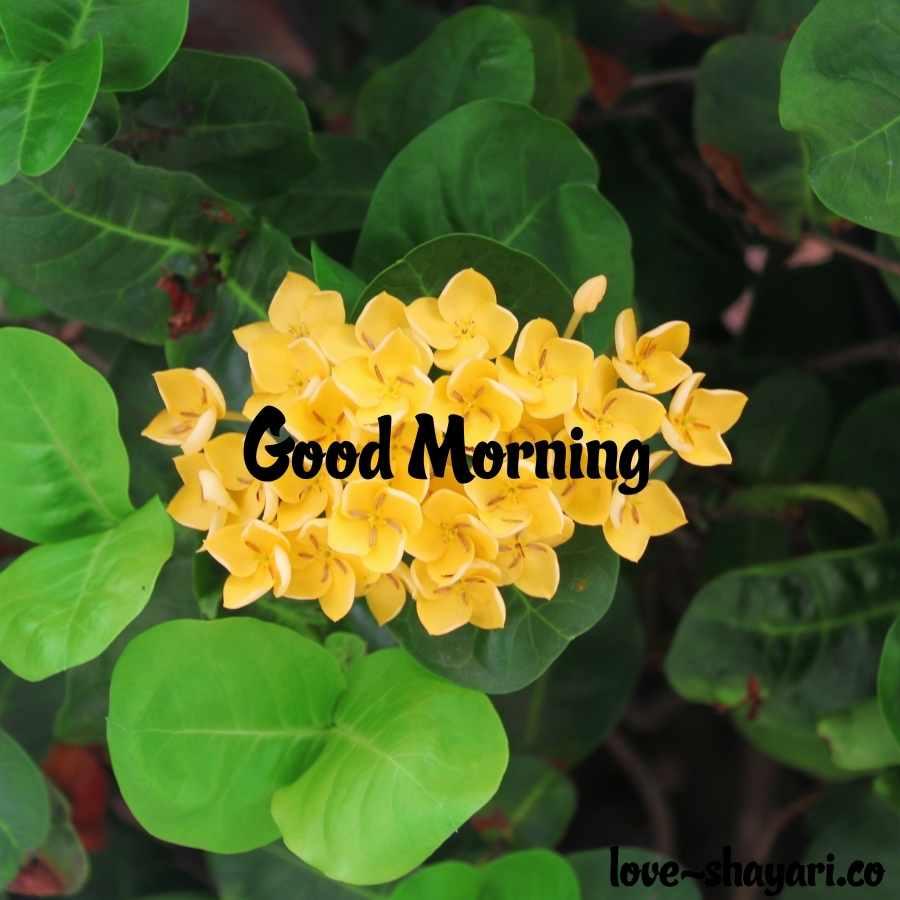 nature beautiful good morning