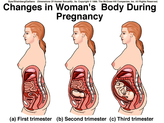 home away from home: oh, the holidays.. diagram pregnant womans body #14