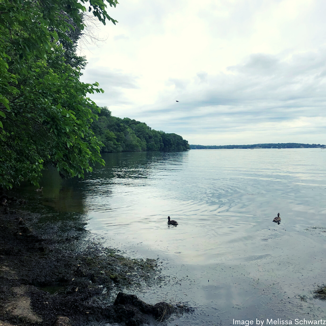Lake Mendota gently lapping onto the shore at Lakeshore Nature Preserve in Madison, Wisconsin.