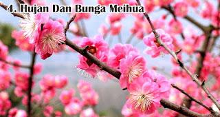 Hujan Dan Bunga Meihua merupakan salah satu fakta unik hujan saat imlek