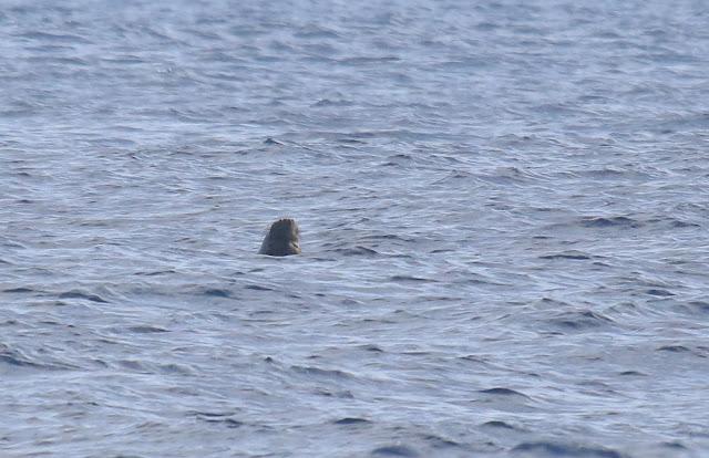 Elephant Seal snout