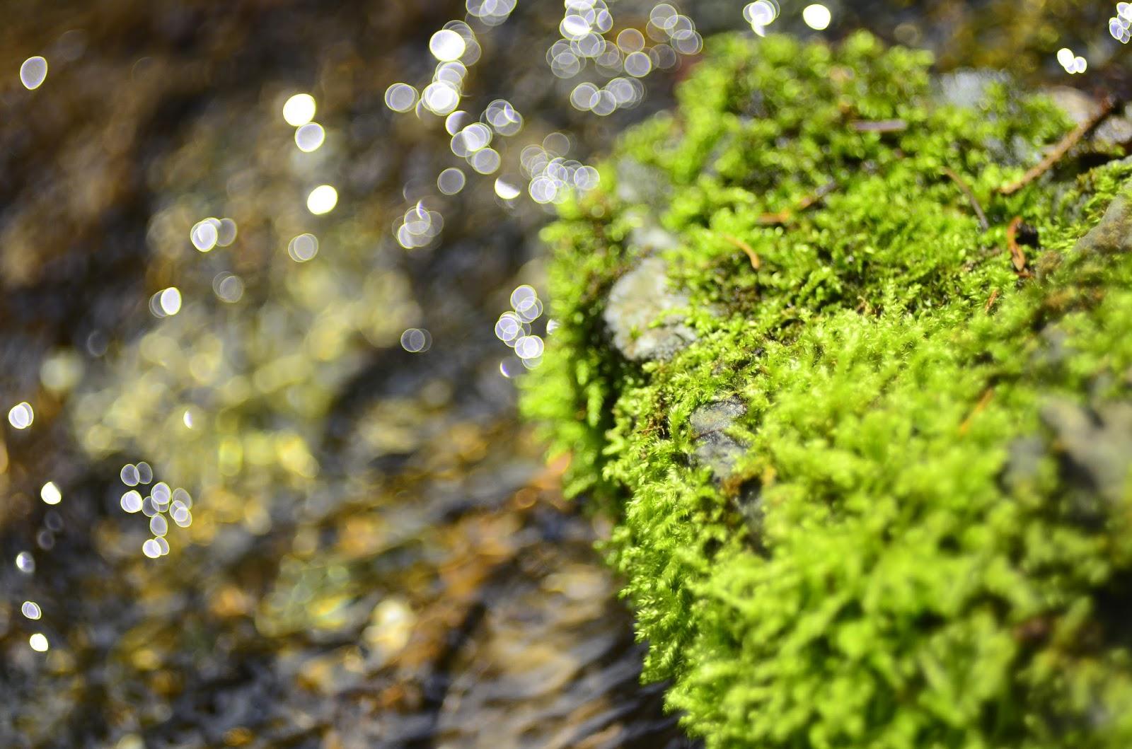 fotogafia | wiosna | makro | kwiaty | bokeh