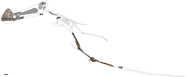 New pterosaur discovered in Australia's outback Queensland